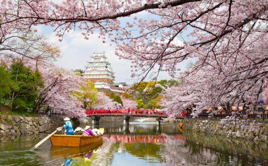 Sakura – cartea de vizită a japonezilor